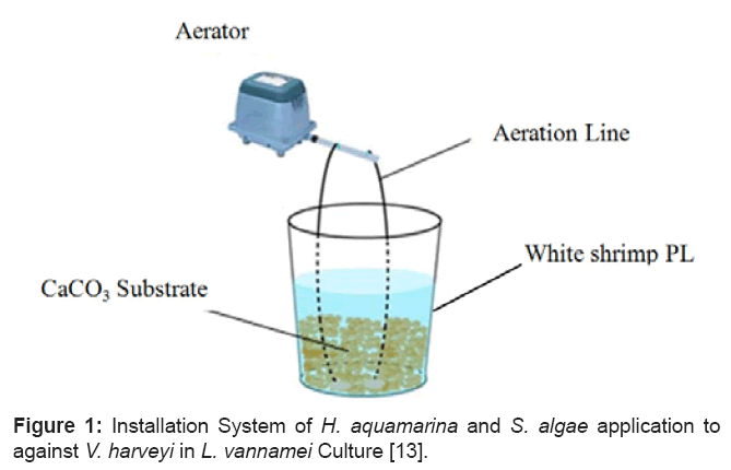 aquaculture-research-development-aquamarina