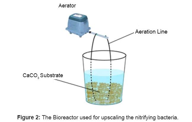 aquaculture-research-development-bioreactor-nitrifying-bacteria