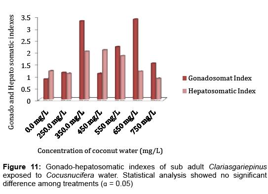aquaculture-research-development-clariasgariepinus