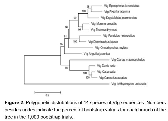 Molecular dating of phylogenetic trees