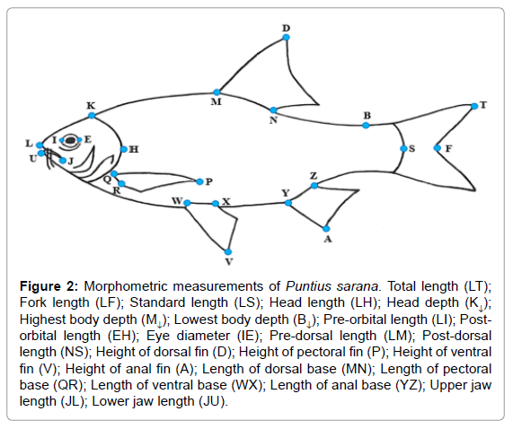 aquaculture-research-development-morphometric-measurements