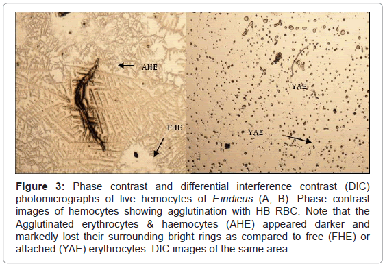aquaculture-research-development-phase-contrast-photomicrographs