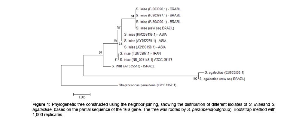 aquaculture-research-development-phylogenetic