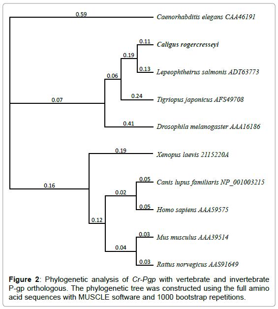 aquaculture-research-development-phylogenetic-vertebrate
