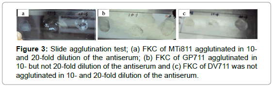 aquaculture-research-development-slide-agglutination-test