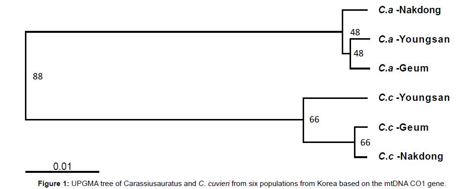 aquaculture-research-development-upgma-carassiusauratus