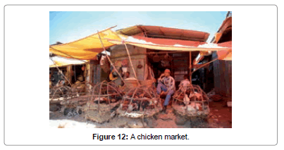 architectural-engineering-technology-chicken-market