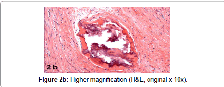 archive-anatomy-physiology-Higher-magnification