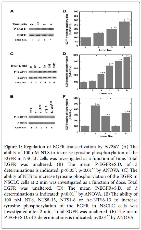 archives-science-tyrosine-phosphorylation