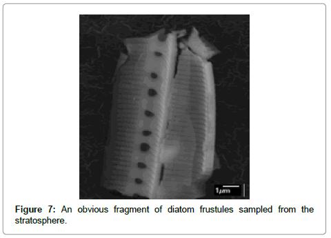 astrobiology-outreach-diatom-frustules