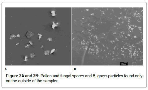 astrobiology-outreach-fungal-spores