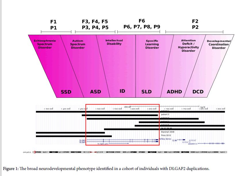 autism-neurodevelopmental-phenotype