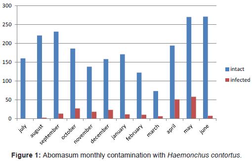 bacteriology-parasitology-Haemonchus-contortus