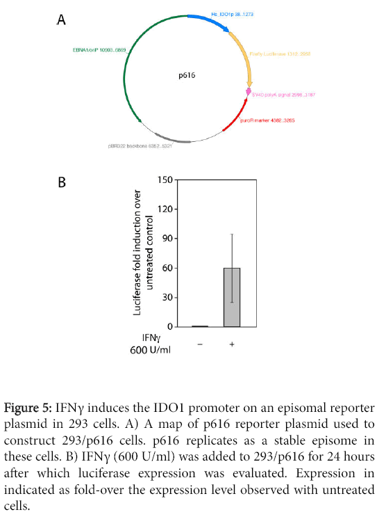 bacteriology-parasitology-IDO1-promoter-episomal-reporter