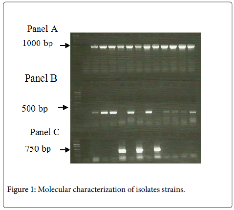 bacteriology-parasitology-Molecular-isolates