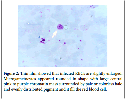 bacteriology-parasitology-blood-cell