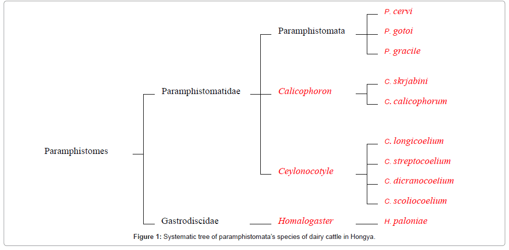 bacteriology-parasitology-dairy-cattle