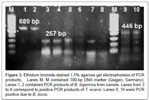 bacteriology-parasitology-molecular-size