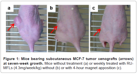 bioanalysis-biomedicine-bearing-subcutaneous-tumor