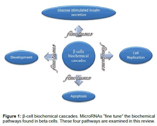 bioanalysis-biomedicine-biochemical-cascades-beta