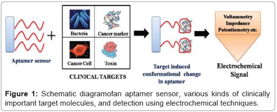 bioanalysis-biomedicine-diagramofan-aptamer-sensor