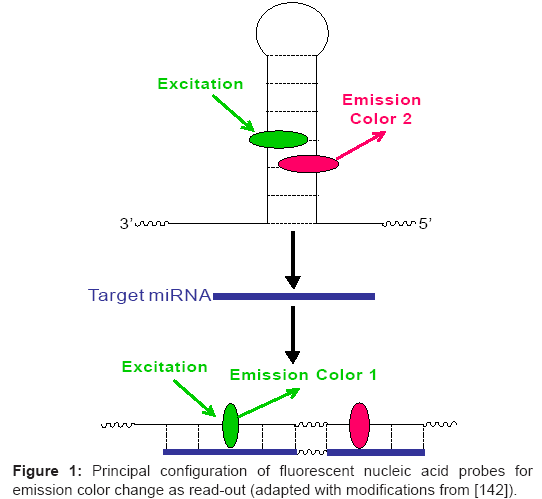 bioanalysis-biomedicine-fluorescent