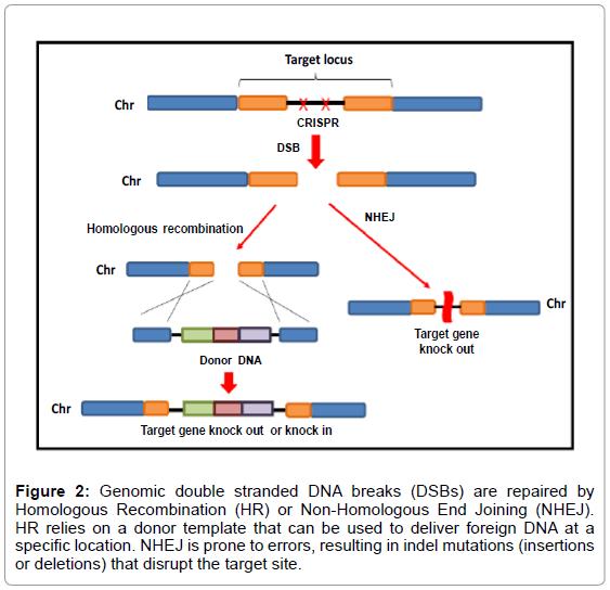 bioanalysis-biomedicine-genomic-double
