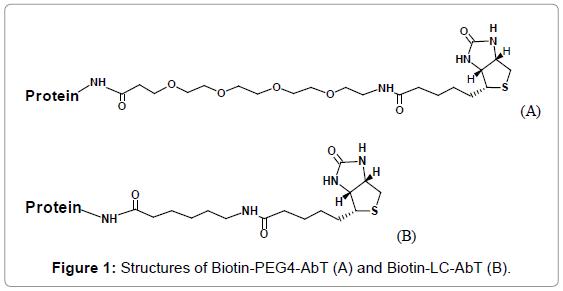 bioanalysis-biomedicine-structures-biotin