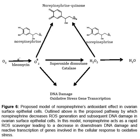 bioanalysis-biomedicine-transcription