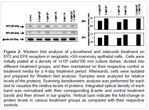 bioanalysis-biomedicine-western-blot-ep2