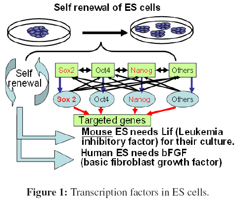 bioceramics-development-applications-Transcription-factors-ES-cells