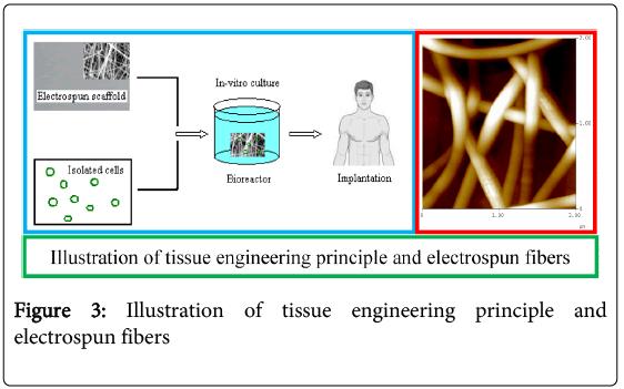 bioceramics-development-applications-tissue-engineering-principle