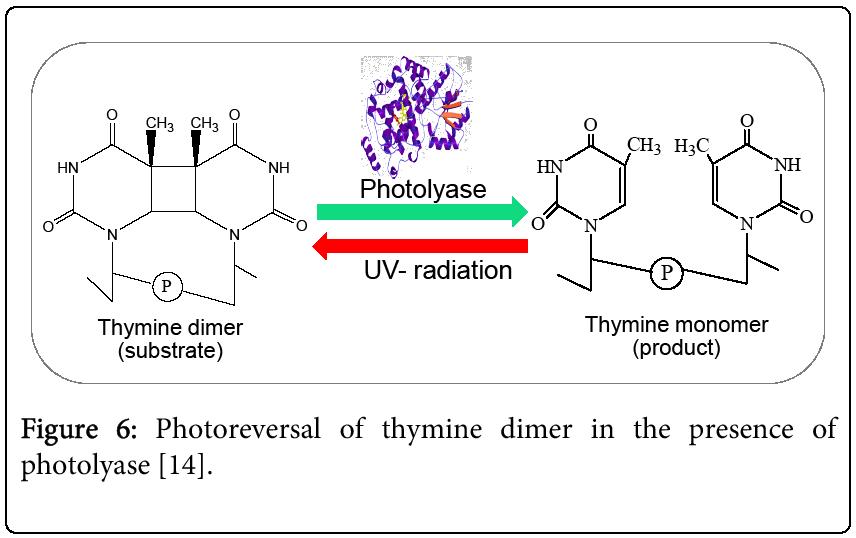biochemistry-analytical-biochemistry-Photoreversal