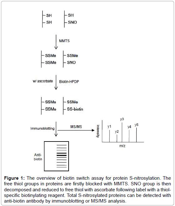 biochemistry-analytical-biochemistry-biotin-protein-nitrosylation