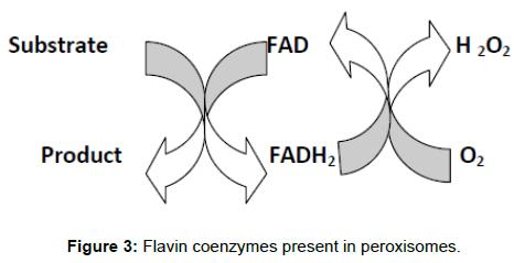 biochemistry-analytical-biochemistry-coenzymes-peroxisomes
