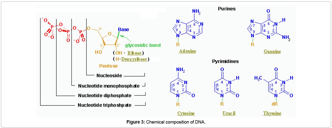 Application of dna fingerprinting in an alleged case of paternity biochemistry analytical biochemistry composition ccuart Gallery