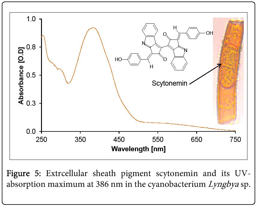 biochemistry-analytical-biochemistry-cyanobacterium