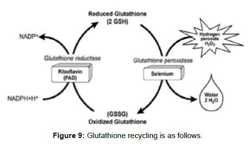 biochemistry-analytical-biochemistry-glutathione-recycling