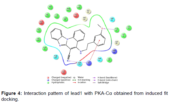 biochemistry-analytical-biochemistry-pattern-induced-docking