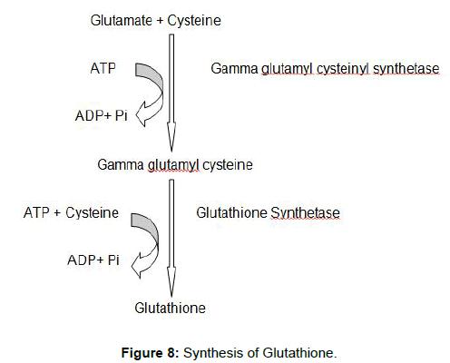 biochemistry-analytical-biochemistry-synthesis-glutathione