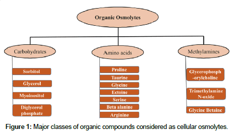 biochemistry-and-analytical-biochemistry-cellular-osmolytes