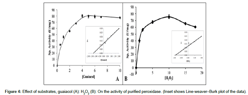 how does the ph affect the activity of peroxidase This experiment was conducted to find out how different temperatures will affect the chemical reaction between the enzyme peroxidase and hydrogen peroxide hypothesis the peroxidase enzyme will become ineffective as a catalyst at high temperatures.