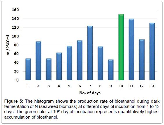bioenergetics-quantitatively-highest
