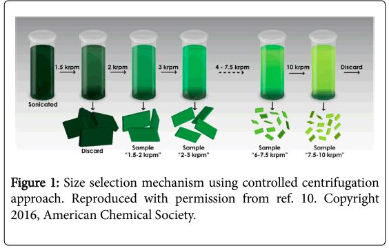 bioenergetics-selection-mechanism