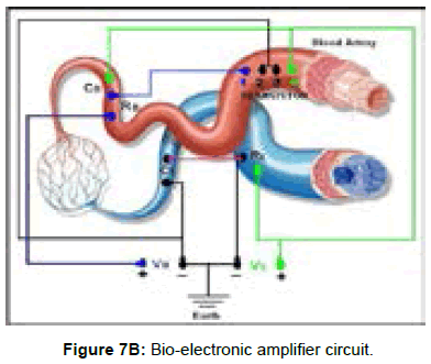 bioengineering-biomedical-science-bio-electronic-amplifier