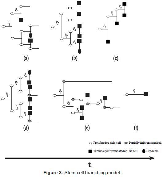 bioengineering-biomedical-science-cell-branching-model