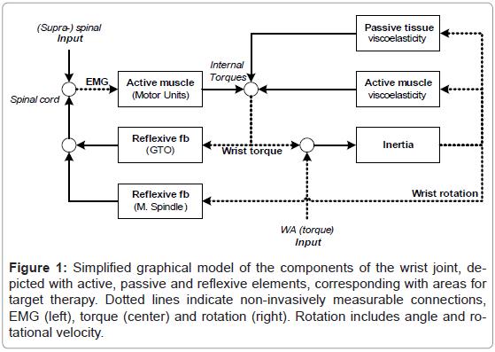 bioengineering-biomedical-science-graphical-wrist-reflexive