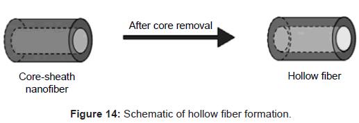 Bioengineering Biomedical Science Hollow fiber Formation