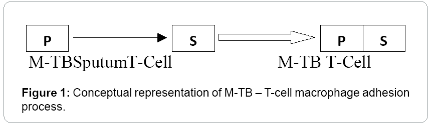 bioengineering-biomedical-science-macrophage