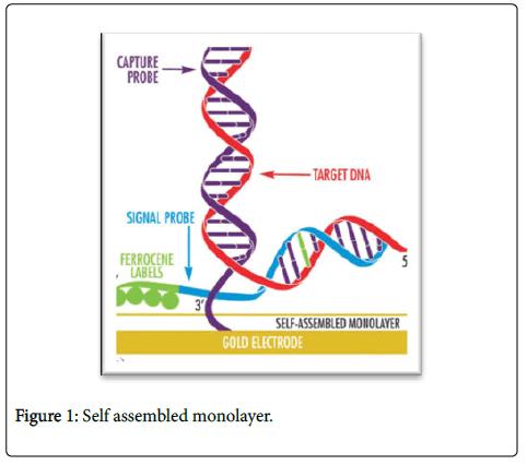 bioengineering-biomedical-science-monolayer